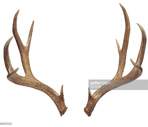 Horns And Antlers deer antlers stock photo getty images