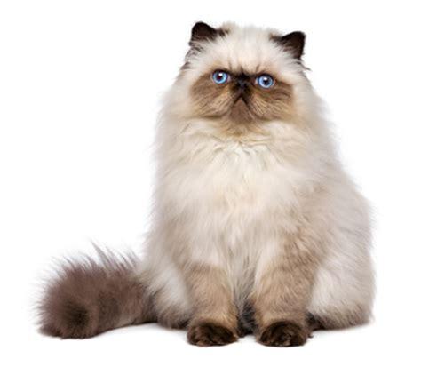 alimentazione gatto anziano la salute gatto anziano alimentazione e cura