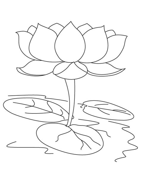 coloring page lotus flower lotus flower coloring pages coloring home