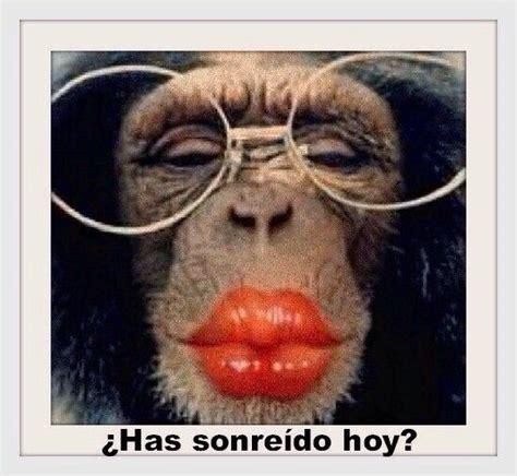 jajajaja funny monkey pictures monkey pictures