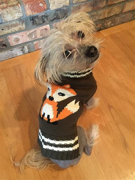 fab dogs fox sweater by fab baxterboo