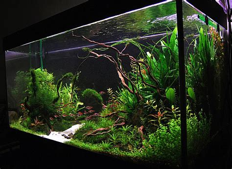 driftwood aquascape aquascape driftwood 1 aquascape pinterest driftwood