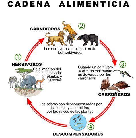 cadena alimenticia quienes son los productores animales