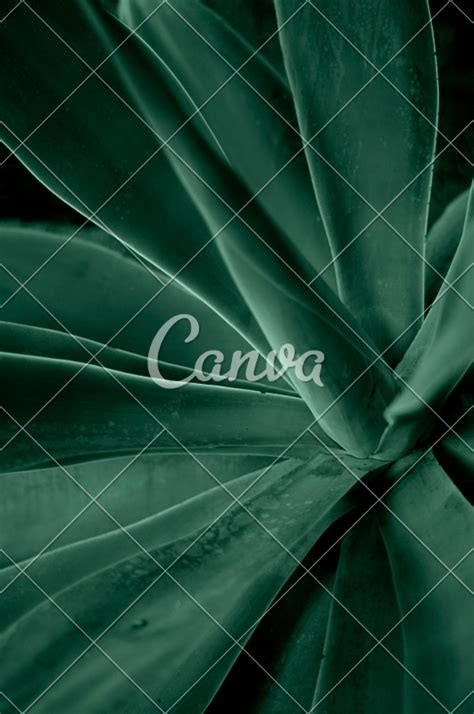 canva wallpaper background and texture images canva stock image library