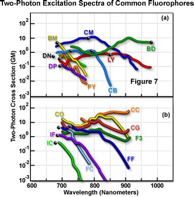 two photon absorption cross section molecular expressions microscopy primer specialized