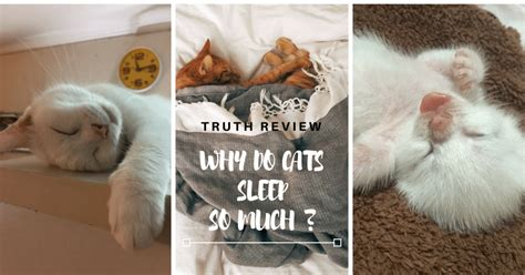 truth review why do cats sleep so much cats in care