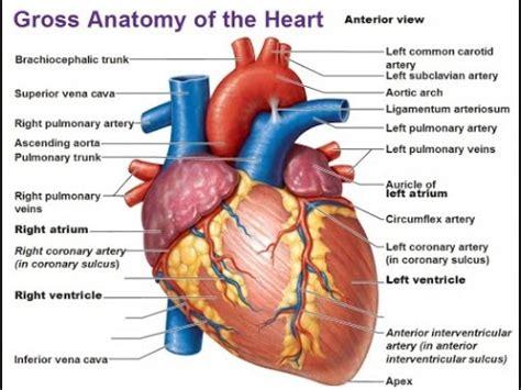 human heart  hindi youtube