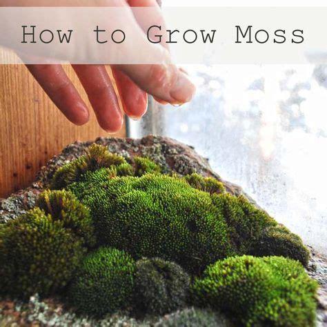 17 best ideas about growing moss on pinterest moss garden diy fairy house and fairies garden