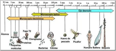 linea del tiempo del microscopio biologia 1 trabajos newbio 3 186 polimodal verde