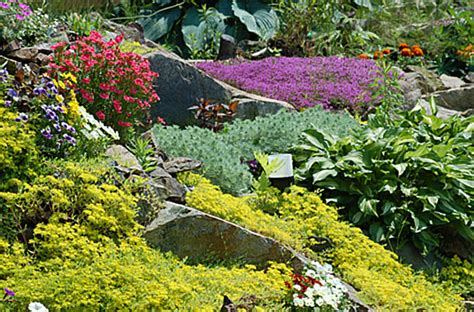 Rock Garden Plant 20 Fabulous Rock Garden Design Ideas