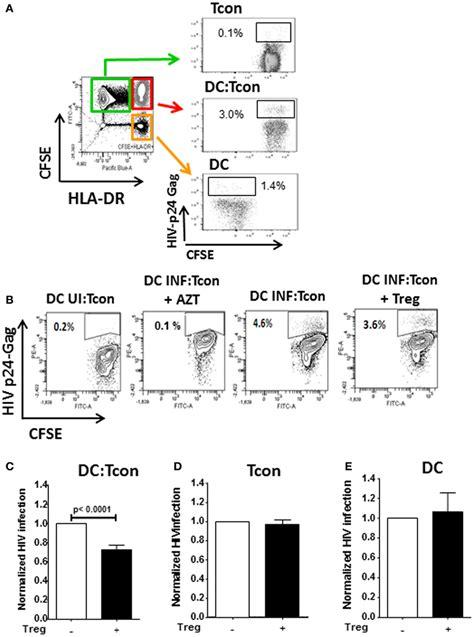 frontiers regulatory dendritic cells for frontiers regulatory t cells diminish hiv infection in
