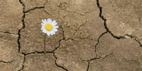 opción b afrontar la adversidad desarrollar la resiliencia resiliencia on emaze