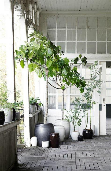pflanzen fürs bad balkon modern idee