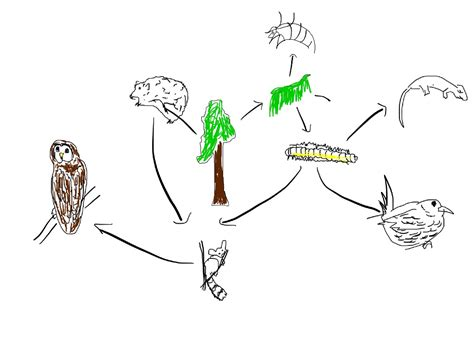 easy food web to draw day 8 2 14 mr sapora s biolosite