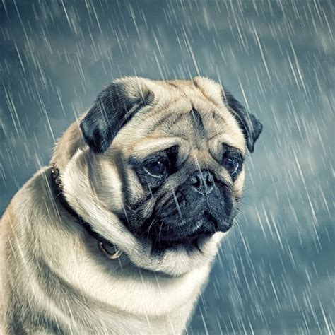 puppy cries can dogs cry and what exactly is