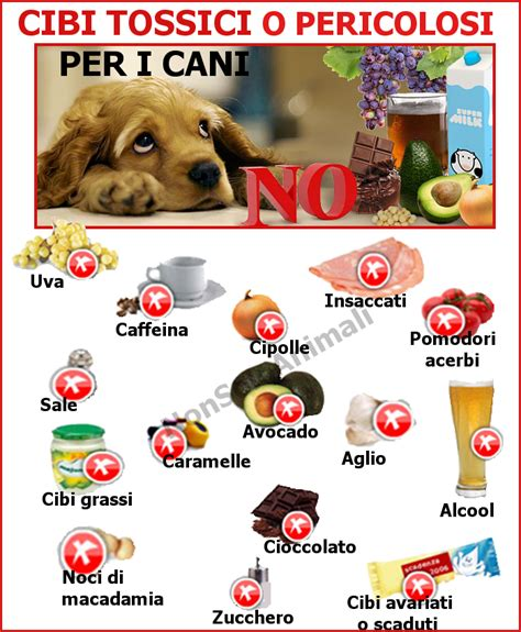 alimenti vietati ai cani cibi tossici e pericolosi per i cani da ricordare