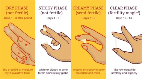 ovulation discharge color cervical mucus chart when you re fertile pregnancy