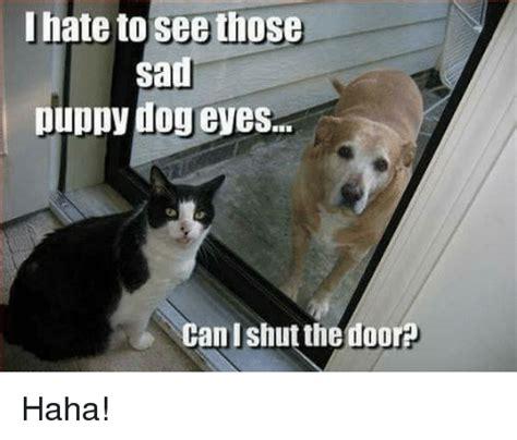 Puppy Dog Eyes Meme - 25 best memes about sad puppy sad puppy memes