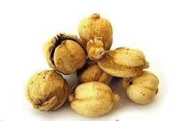 Obat Asam Lambung Ramuan Cina resep rahasia penyembuhan alami dengan buah kapulaga
