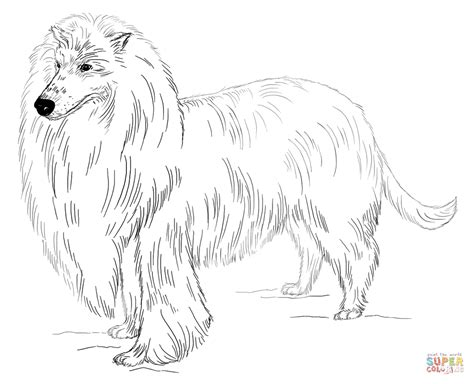 coloring pages of collie dogs haired collie coloring page free printable coloring