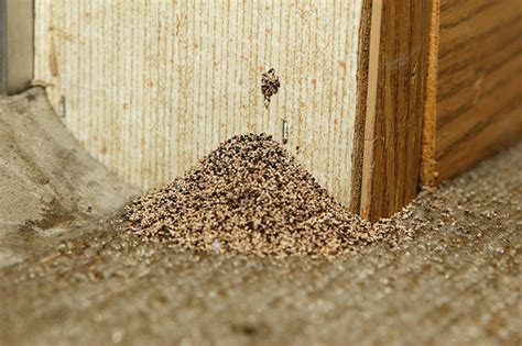 The Amazing Termite by Get Rid Of Wood Termites