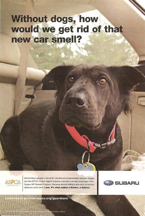 suburu hair salon dog 1000 images about animal lovers on pinterest subaru