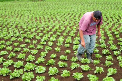 imagenes artisticas quienes las producen al producir alimentos 191 nos estamos comiendo el planeta