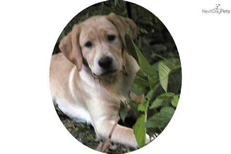 calm breeds medium sized calm medium size dogs breeds picture