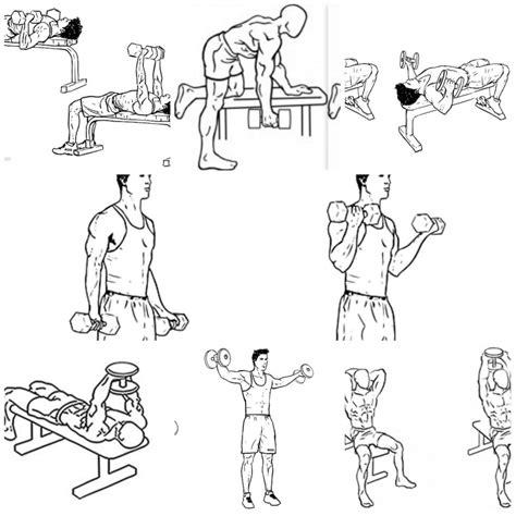 ejercicios mancuernas en casa ejercicios con mancuernas en casa unifeed club