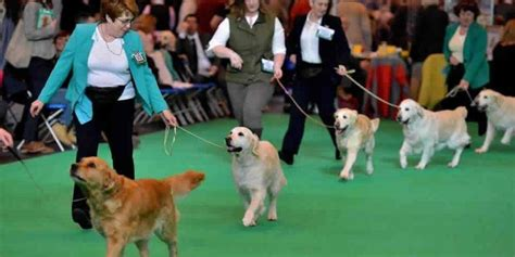 jacksons boat dog show 2018 crufts 2018 best in show odds