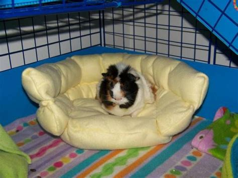 guinea pig bed 118 best guinea pig cage ideas cavy diy images on pinterest