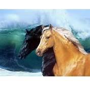 Paarden Fotos  De Jimdo Website Van Noatje