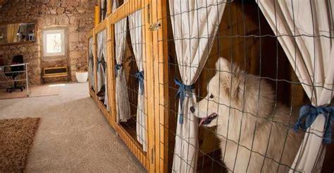 layout de hotel para cachorro como montar um hotel para cachorros confira aqui