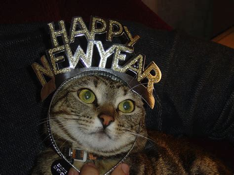 happy mew year 10 cats in new year s hats catster