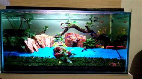membuat aquascape air laut heboh aquascape konsep sederhana youtube