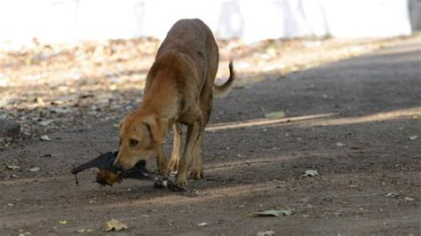 dogs with rabies future india s rabid problem is running the country ragged