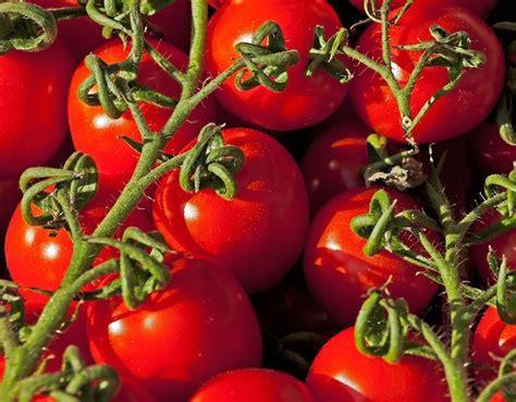 allergia al nichel alimenti da evitare alimenti da evitare se si 232 allergici al nichel donna