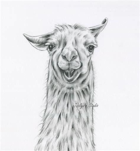 sketchbook lama llama drawing charcoal drawing print llama
