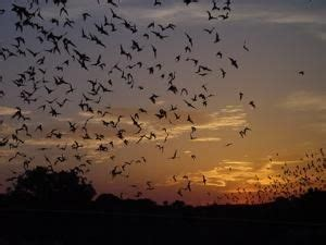wild birds unlimited bats abbotsford bc bees bats