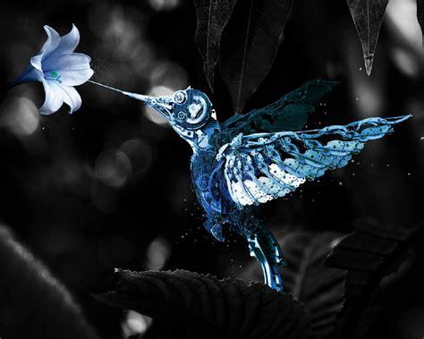 wallpaper sayap hitam wallpaper seni digital burung burung satu warna