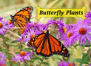 Container Gardening Book - butterfly plants list butterfly flowers and host plant ideas