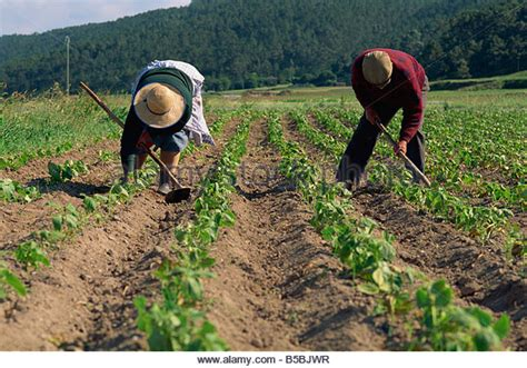 subsistence agriculture wikipedia
