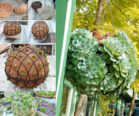 Turtle Succulent Planter by Gorgeous Gardening Create Your Own Hanging Succulent Ball