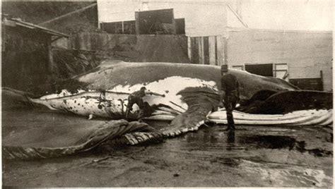 Marlborough Sounds Whaling