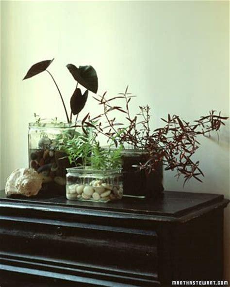 inside garden best 25 indoor water garden ideas on pinterest aquatic