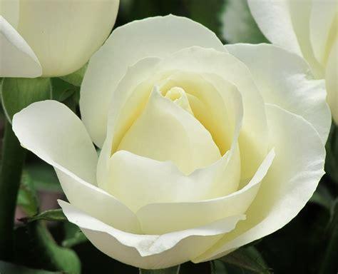 imagenes de flores bonitas para facebook banco de im 193 genes 40 im 225 genes bonitas para compartir en
