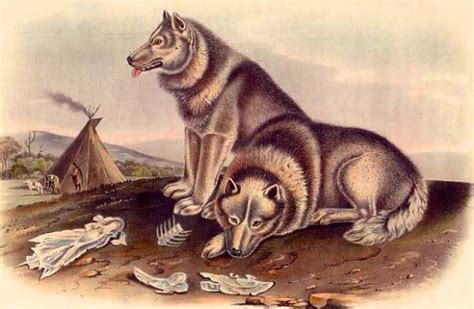 when were dogs domesticated dna study suggests dogs were domesticated in central asia genetics sci news