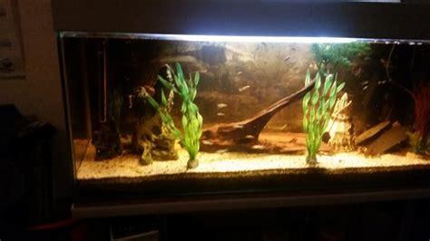 gestell aquarium guppys fische kleinanzeigen tiermarkt deinetierwelt