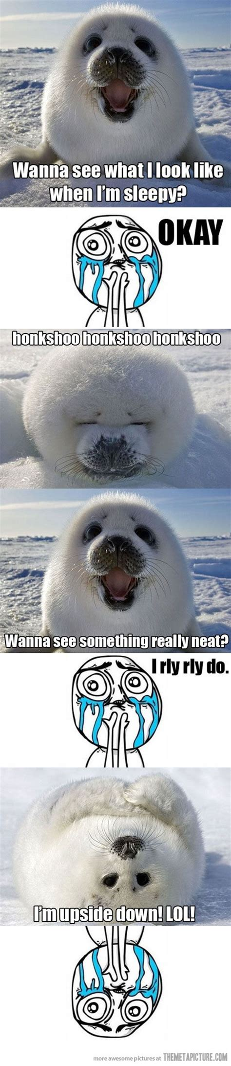 Harp Meme - baby harp seal baby seal baby harp seal and harp seal