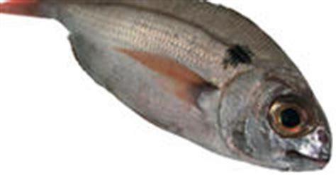 pesci e frutti di mare che contengono calcio il calcio